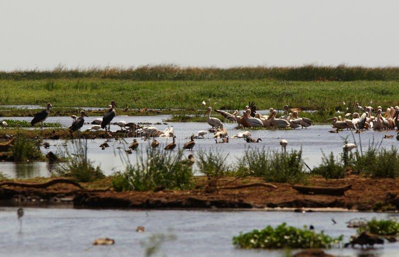 Lago com pássaro imagens de stock
