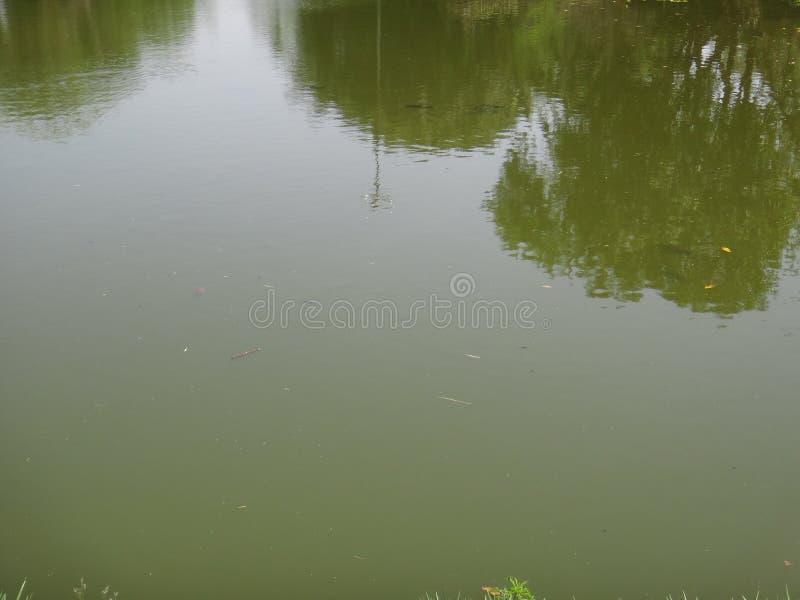 Lago com peixes foto de stock royalty free