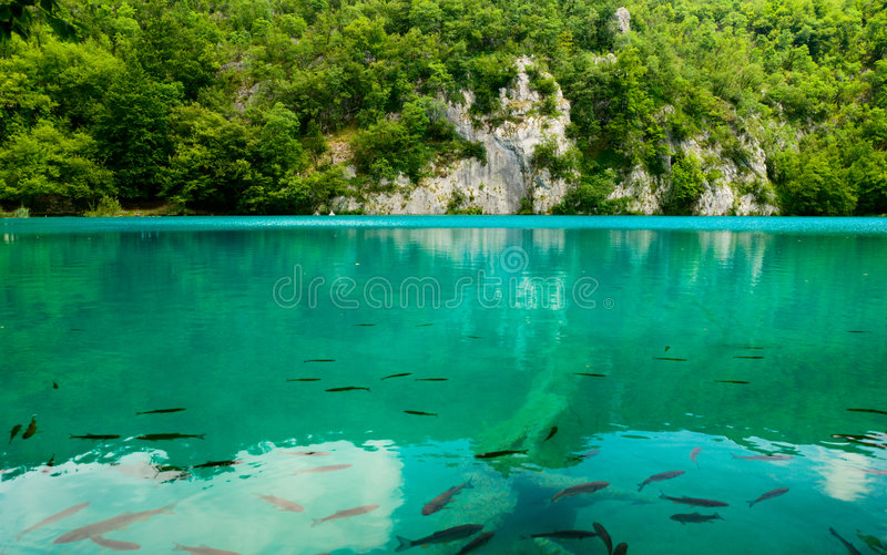 Lago com peixes imagem de stock