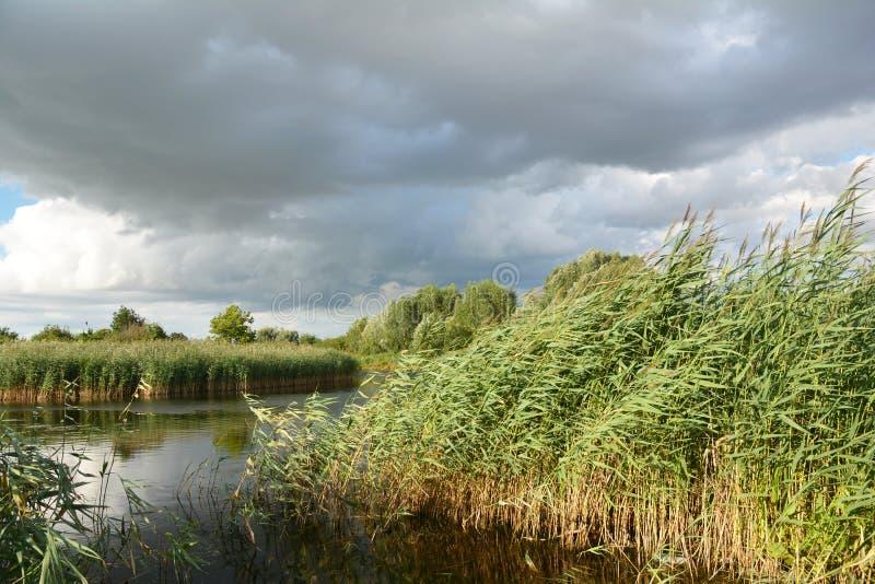 Lago con el bastón, cañas, espadaña en clima tempestuoso imágenes de archivo libres de regalías