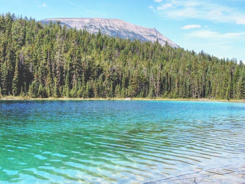 Lago con gli alberi fotografia stock libera da diritti