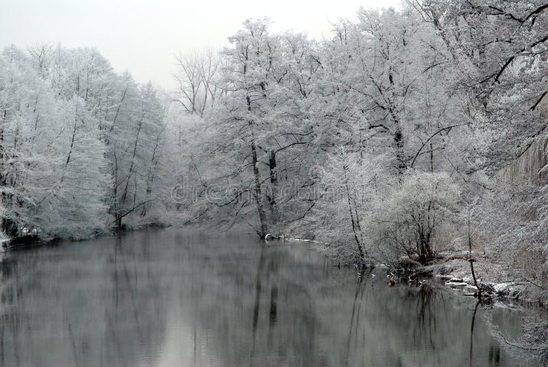Lago con gli alberi innevati immagine stock libera da diritti