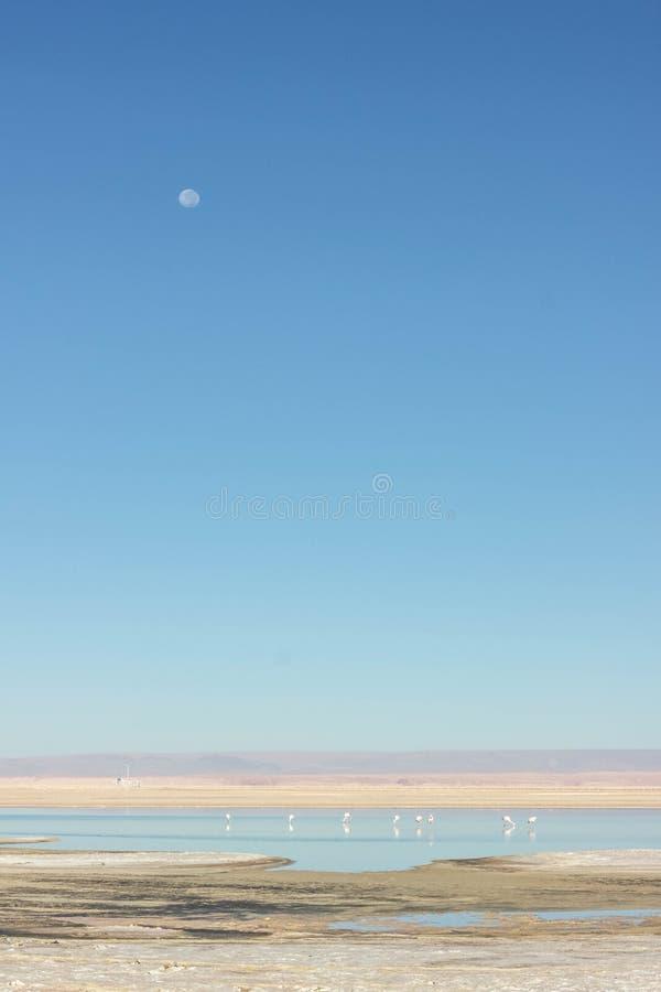 Lago con i fenicotteri nel deserto fotografia stock
