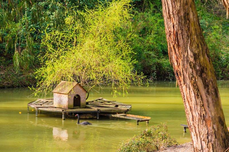 Lago con la casa para los swawns fotos de archivo libres de regalías