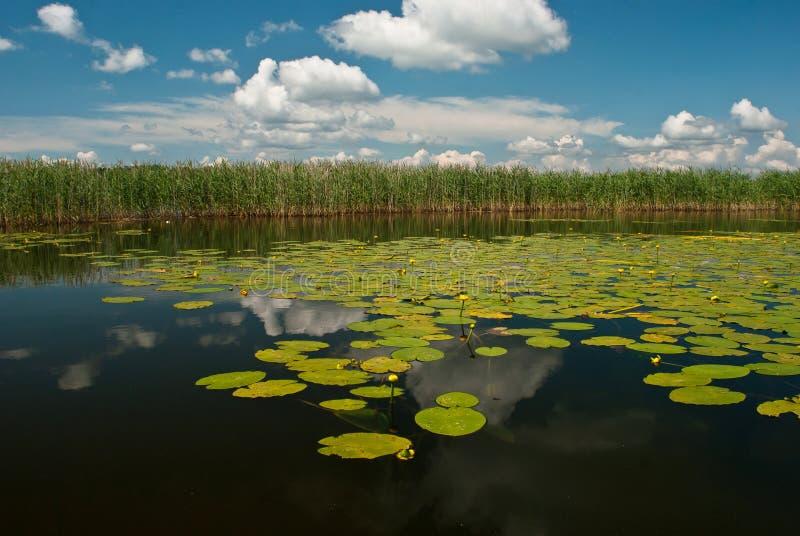 Lago con las flores amarillas imagen de archivo