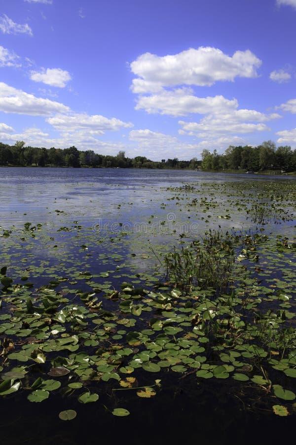 Lago con las pistas de lirio fotos de archivo libres de regalías