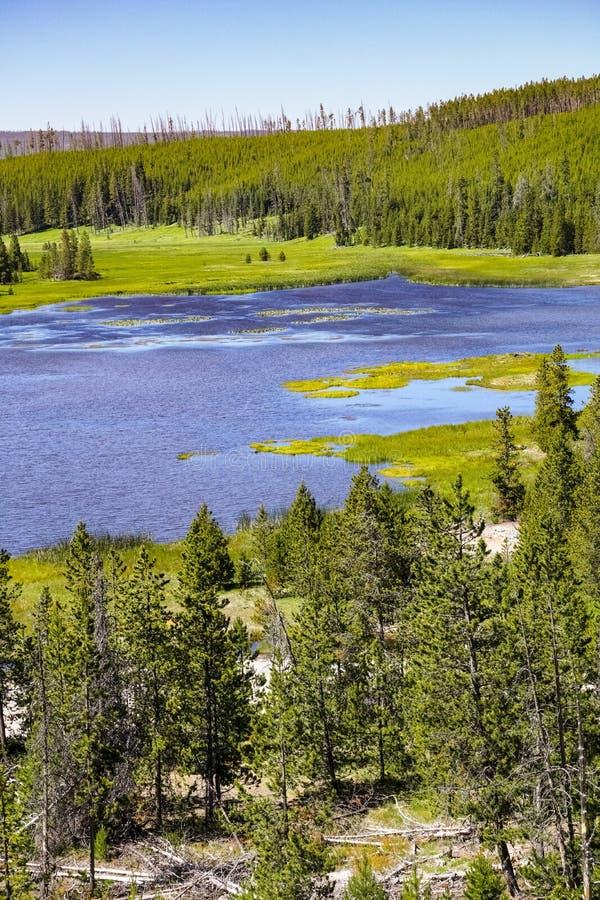 Lago con los lirios de agua amarilla, parque nacional mountain de Yellowstone imagen de archivo libre de regalías