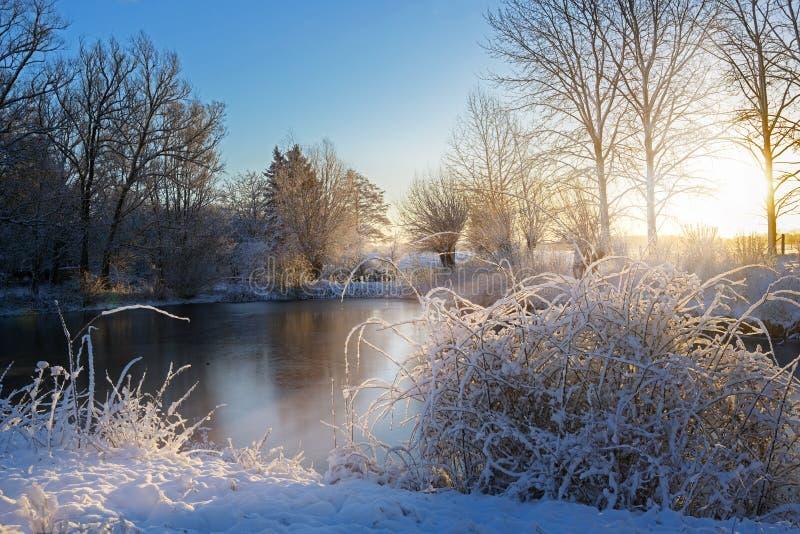 Lago congelado y arbustos nevados después de la salida del sol, paisaje en un día de invierno frío, espacio de la copia foto de archivo libre de regalías