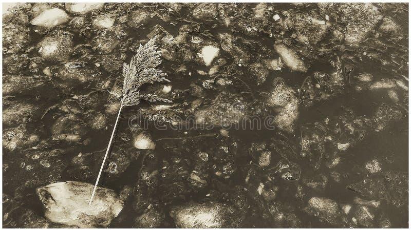 Lago congelato astratto in bianco e nero fotografia stock libera da diritti