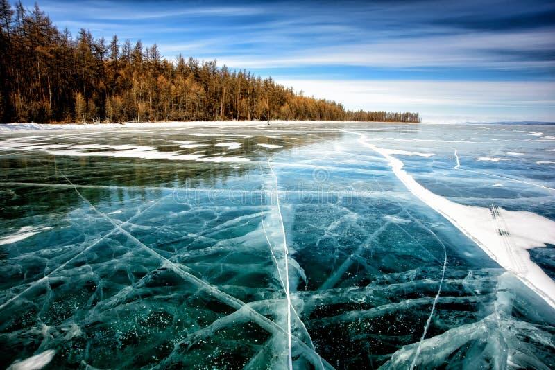 Lago congelato Khubsugul Bella foresta vicino alla superficie del ghiaccio un giorno gelido Sfondo naturale fotografia stock libera da diritti