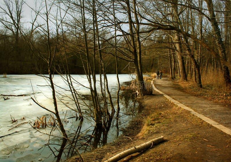 Lago congelato nel parco immagini stock libere da diritti