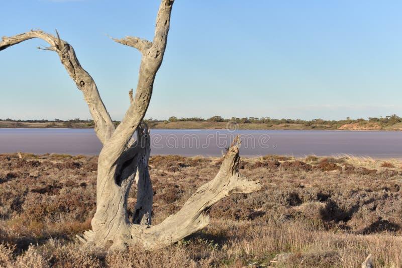 Lago cor-de-rosa Austrália fotografia de stock royalty free