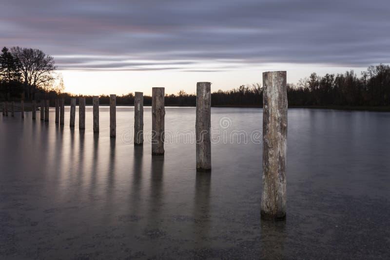 Lago cow a Augusta ad alba fotografia stock libera da diritti