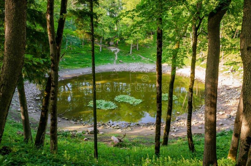 Lago in cratere della meteorite di Kaali Isola di Saaremaa, Estonia fotografia stock