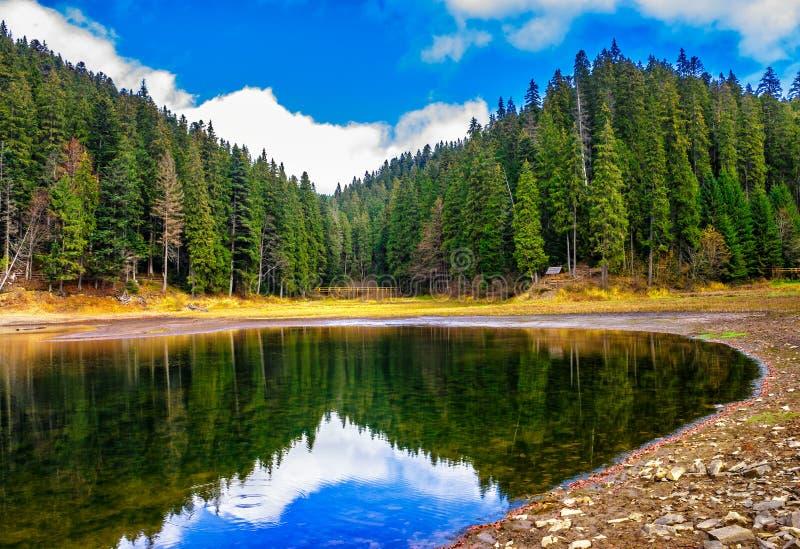 Lago cristalino cerca del bosque del pino en montañas fotografía de archivo libre de regalías