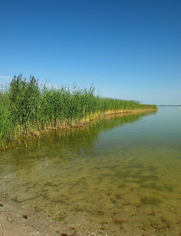 Lago cubierto con la caña fotos de archivo