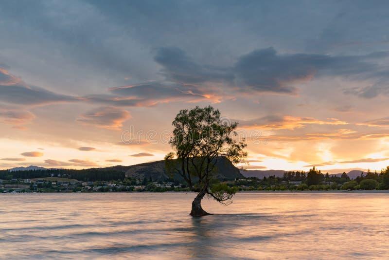 Lago da água de Wanaka com a árvore sozinha do suporte fotografia de stock royalty free