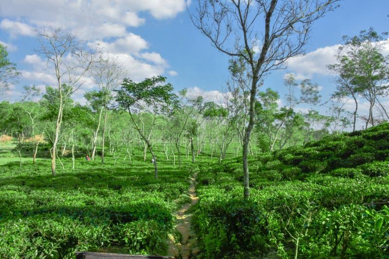 Lago da água dentro do jardim de chá imagem de stock royalty free