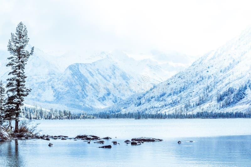 Lago da montanha do inverno com os pinheiros cobertos de neve na costa imagem de stock
