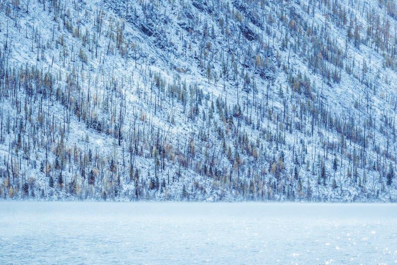 Lago de la montaña del invierno con los árboles de pino nevados en la orilla fotografía de archivo libre de regalías