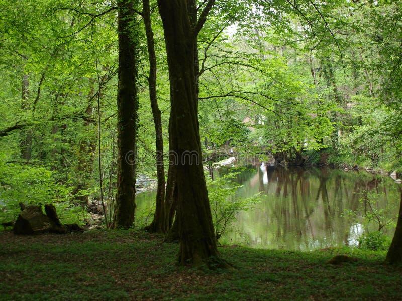 Lago de la primavera del sotobosque imagenes de archivo