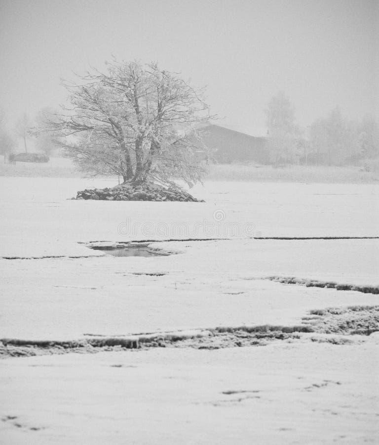 Lago de las impresiones del invierno y colección de los árboles imagenes de archivo