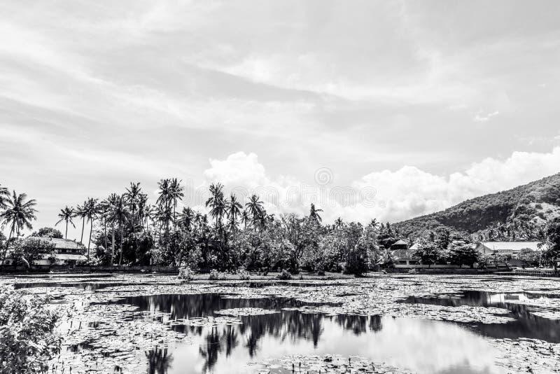 Lago de lotos en al oeste de la isla tropical Bali, Indonesia Foto blanco y negro de Pekín, China imágenes de archivo libres de regalías