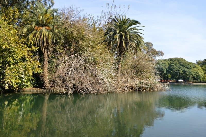 Lago de Palermo, Buenos Aires, Argentina royaltyfri foto