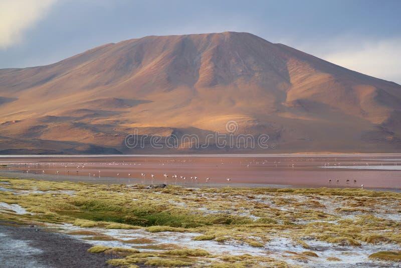 Lago de sal o Laguna rojo que sorprende Colorada con los flamencos no numerables en la alta meseta de Potosi, Bolivia, Suramérica imagen de archivo