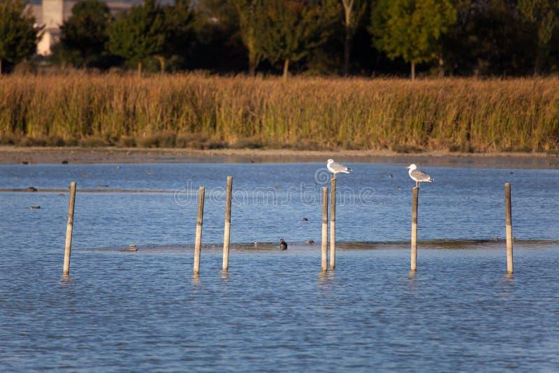 Lago de Salburua, Vitoria imagen de archivo libre de regalías