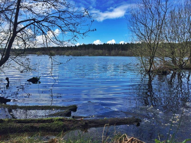 Lago del bosque de Delamere imagenes de archivo