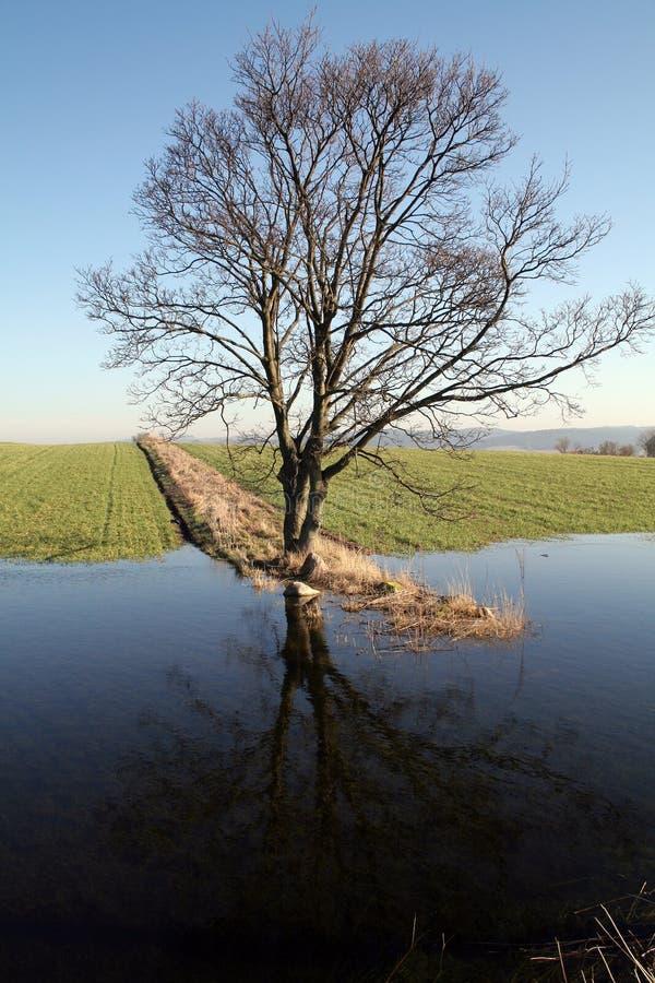 Lago del campo del árbol fotografía de archivo libre de regalías
