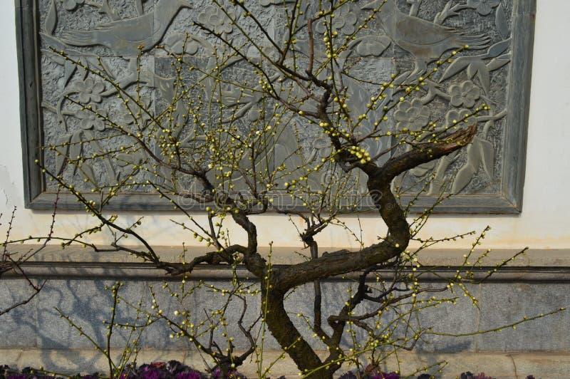 Lago del este Plum Garden foto de archivo libre de regalías