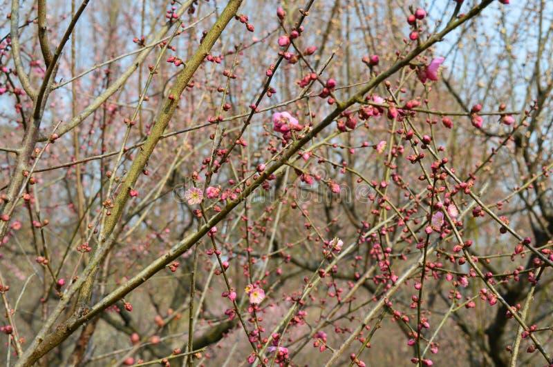 Lago del este Plum Garden fotografía de archivo