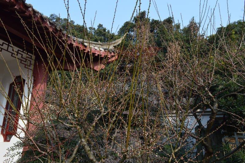 Lago del este Plum Garden fotos de archivo