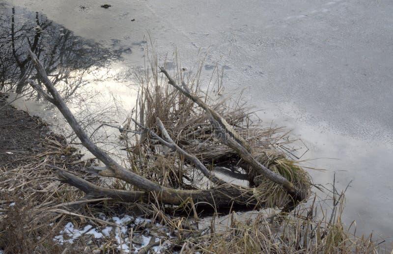 Lago del invierno de Andscape el 25 de enero de 2016 en Sofía, Bulgaria imágenes de archivo libres de regalías