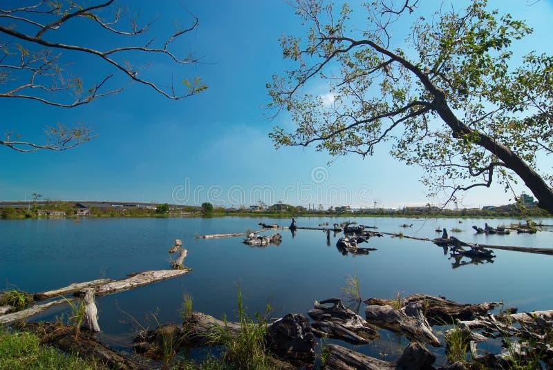 Lago del legname di memoria immagini stock