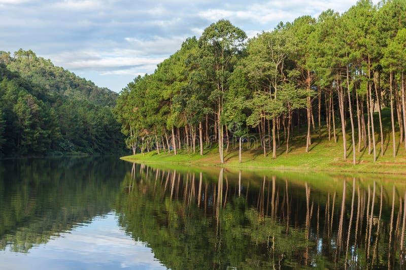 Lago del ung de la punzada, pino Forest Park con la reflexión del pino en Maehongson, Tailandia imagenes de archivo