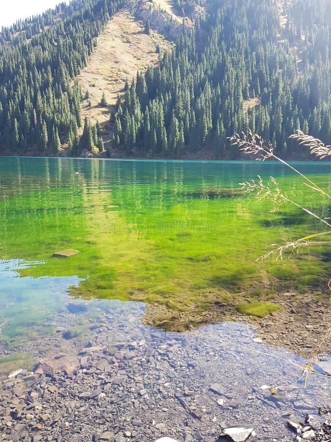 Lago della montagna di Kaindy nel Kazakistan Naturale, foresta fotografie stock