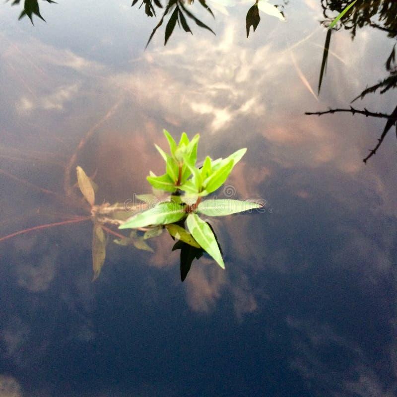 lago dello zucchero filato fotografie stock