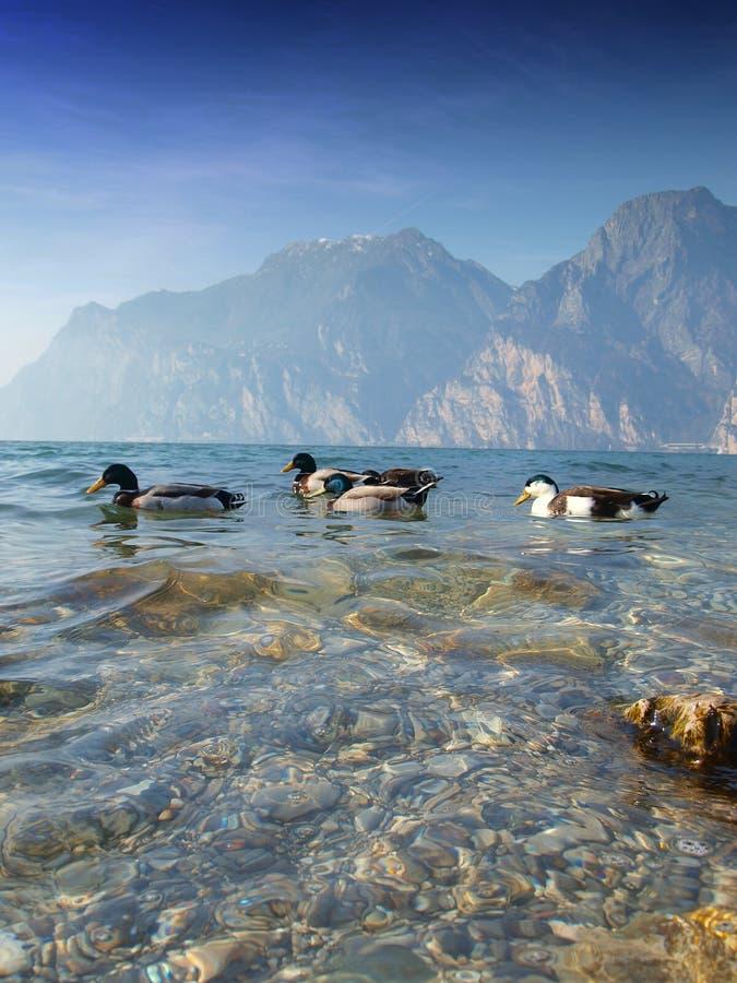 Lago di Garda - Italien stockfoto