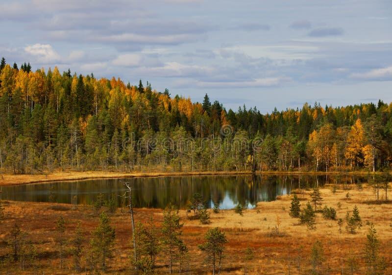 Lago di legno. paesaggio di autunno. natura. La Carelia fotografia stock