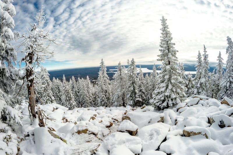 Lago do norte da montanha alta quadro pela floresta conífera fotos de stock royalty free