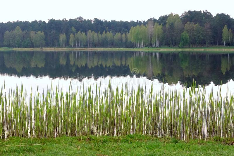 Lago Druskininkai Vijunele fotografia stock