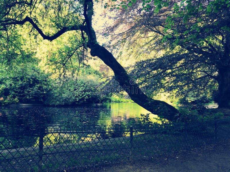 Lago durante o verão em uma floresta imagem de stock
