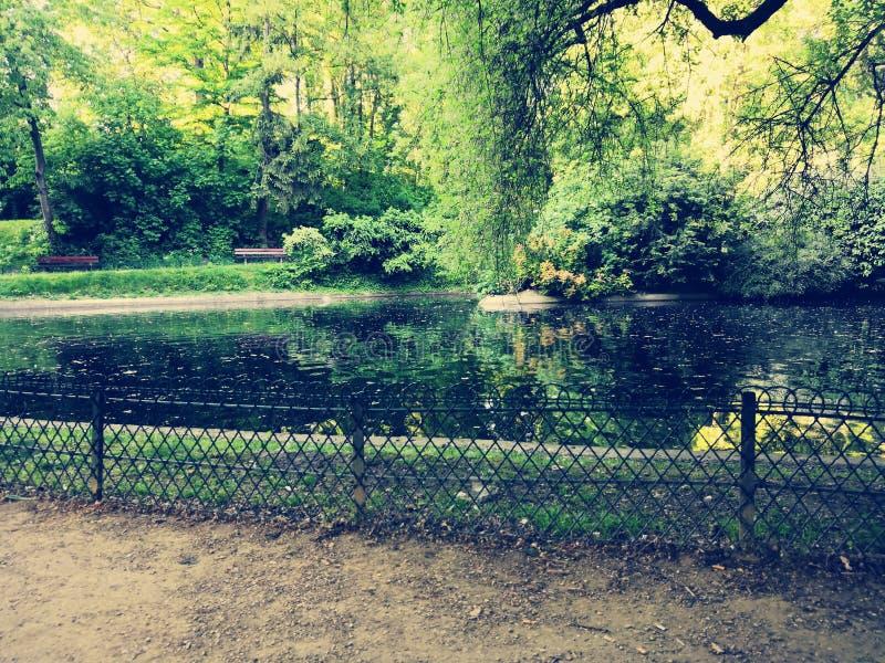 Lago durante o verão em uma floresta fotografia de stock