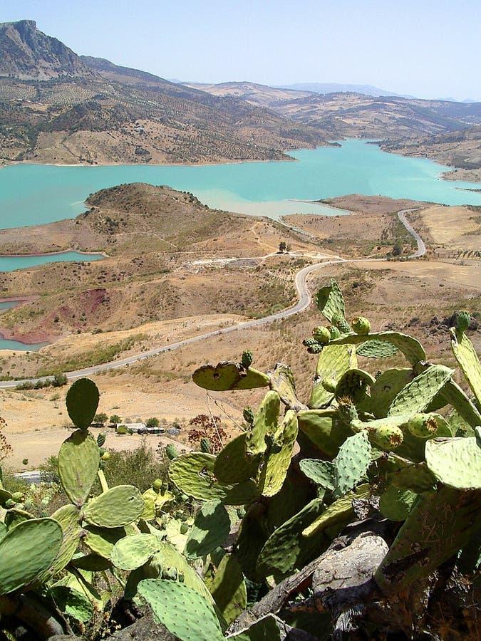 Lago e cactos fotografia de stock
