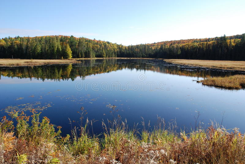 Lago e floresta imagens de stock royalty free