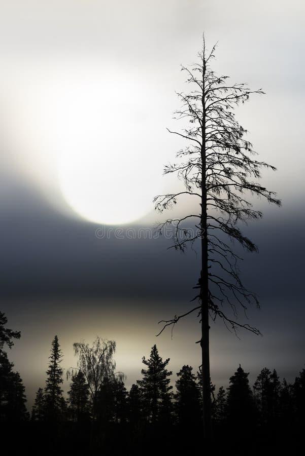 Lago e floresta escandinavos fotografia de stock