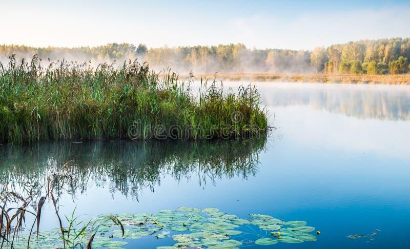 Lago e juncos fotografia de stock royalty free